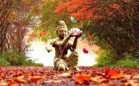 yoga Cornwall autumn vinyasa yin